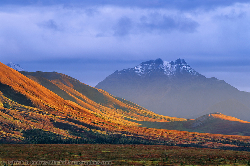 Autumn tundra landscape, Alaska Range mountains, Denali National Park, Alaska