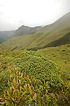 Sur les pentes ouest de la Montagne Pelée (1395 m)
