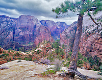View of Zion National Park from trail in high country, Utah