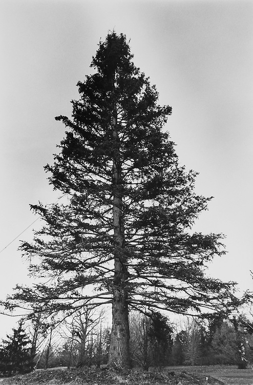 Christmas tree now planted at National Arboretum in November 1992. (Photo by Maureen Keating/CQ Roll Call via Getty Images)