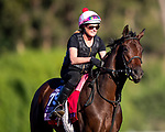 OCT 28: Breeders' Cup Juvenile Fillies entrant Perfect Alibi, trained by Mark E. Casse,  at Santa Anita Park in Arcadia, California on Oct 28, 2019. Evers/Eclipse Sportswire/Breeders' Cup