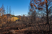 California native landscape, recovery after 2017 Santa Rosa, Sonoma Tubbs fires, Pepperwood Preserve