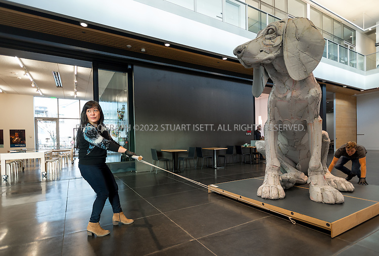 12/17/2014&mdash;Tacoma, WA, USA<br /> <br /> <br /> Ellen Ito, an exhibition and collection assistant at Tacoma Art Museum, helps to move &ldquo;Leroy, the Big Pup&rdquo; (2004 by Scott Fife) into position in the main hall of the Tacoma Art Museum (TAM) before opening the museum to the public on Wednesday, December 17th, 2014.<br /> <br /> Photograph by Stuart Isett<br /> &copy;2014 Stuart Isett. All rights reserved.