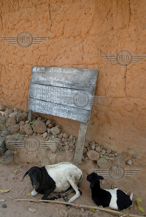 Goats sit in front a blackboard being used for adult education classes in Elemere village...