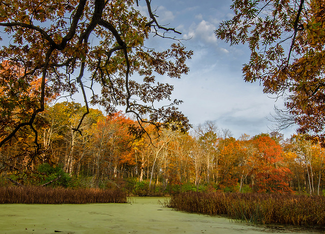 Mark's Pond is colored by autumn hues, Green Valley Forest Preserve, DuPage County, Illinois