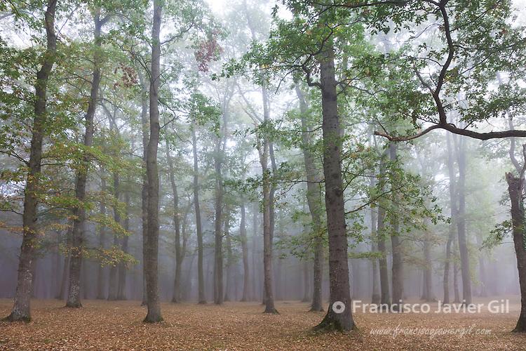 Forest in Legutiano, Alava, Spain