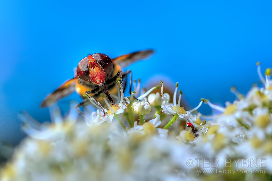 Frontal macro view of honeybee perched on flower