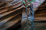 The wet entrance to lower Echo Canyon, Zion National Park Utah.