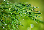 Dill and dew