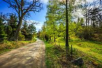Lövsprickning på Käringboda i Stockholms skärgård