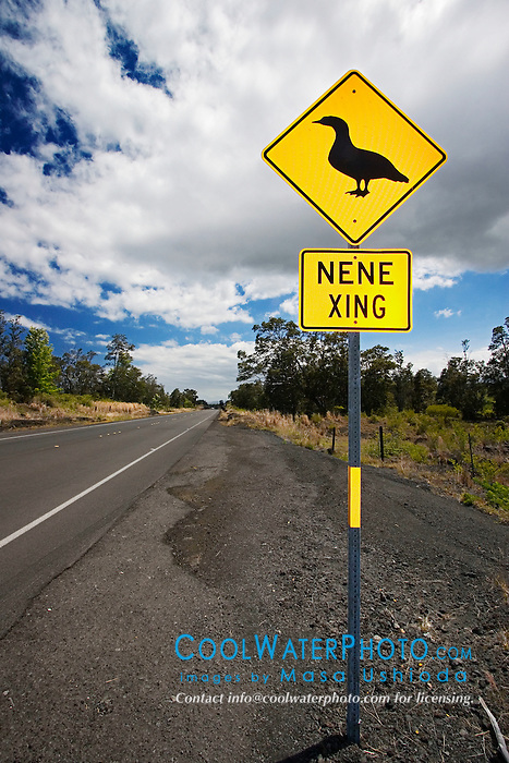 Highway road sign to protect crossing Nene, Hawaiian Goose, Branta ( = Nesochen ) sandvicensis, critically endangered, endemic to Hawaiian Islands, Hawaii State Bird, Volcanoes National Park, Kilauea, Big Island, Hawaii