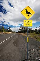 Highway road sign to protect crossing Nene, Hawaiian Goose, Branta ( = Nesochen ) sandvicensis, critically endangered, endemic to Hawaiian Islands, Hawaii State Bird, Volcanoes National Park, Kilauea, Big Island, Hawaii