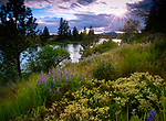 Idaho, Washington, Stateline, Post Falls. Wildflowers on the Idaho side of the Spokane River at Stateline after a clearing spring storm.
