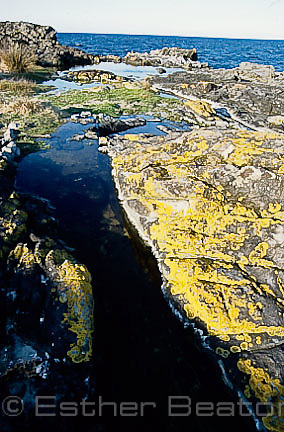 Brackish ponds where Green and Golden Bell Frogs found, Broughton Island, Myall Lakes National Park, New South Wales