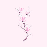 Elegant tree branch of magnolia flowers purple blossom Japanese Zen painting based artistic design illustration isolated on pink background