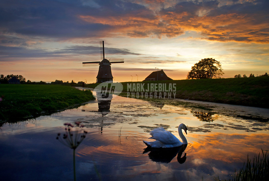 Amsterdam Holland Netherlands windmill water sunset dusk swan bird reflection country countryside europe