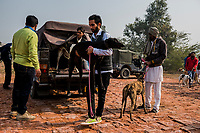 FARIDKOT, PUNJAB, INDIA - JANUARY 05, 2016: Trainers un-load greyhounds owned by Kushaldeep Singh Dhillon also known as KIKI, prior to the start of a greyhound race meet on January 5, 2016 in Faridkot, India. <br /> Daniel Berehulak for The New York Times
