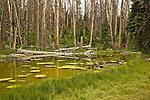 The Alpine Pond along the Alpine Pond Loop Trail in Cedar Breaks National Monument, Utah