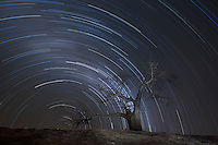 Rhodes' Baobab with startrails
