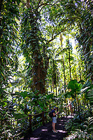 Visitors on a pathway, one taking photos using a tripod, amidst tropical foliage at Hawaii Tropical Botanical Garden, Papa'ikou, Big Island of Hawaiʻi.