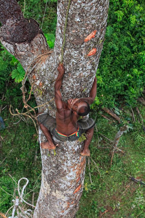 The dental mutilation among pygmies and Bantu peoples of the North-West of Congo-Brazzaville have been motivated by aesthetics, courage and prominence. Long perpetrated by the two ethnic groups, they tend to disappear among the Bantu. On an enormous mahogany tree 50 metres high, the honey-hunter perched on the trunk passes a branch with dexterity. The pygmies are excellent climbers, athletes of the forest who accomplish feats every day in harvesting the honey. ///Les mutilations dentaires chez les peuples bantous et pygmées du Nord-Ouest du Congo Brazzaville ont été motivées par l'esthétique, le courage et la notabilité. Longtemps perpétrées par les deux groupes ethniques, elles tendent à disparaître chez les bantous. Sur un énorme acajou de plus de 50 mètres de hauteur, le chasseur juché sur le tronc passe avec dextérité une branche. Les pygmées sont d'excellents grimpeurs, des athlètes de la forêt qui réalisent chaque jour des prouesses pour récolter le miel.