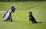 Dogs on the golfcourse
