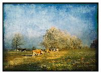 Painterly scenes