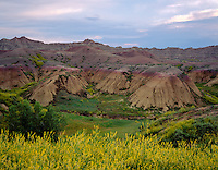 Badlands National Park, SD  <br /> Pastel colored hills and cliffs with Yellow Sweet Clover (Melilotus officinalis) blooming in the foreground and washes