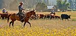 Cowboy Photography Workshop   Erickson Cattle Co. .. Photo by Al Golub/Golub Photography