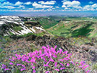 Penstemon and Little Blitzen Gorge. Steens Mountain Wilderness, Oregon