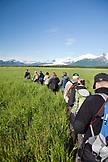 USA, Alaska, Homer, a group of hikers go on a bear viewing walk, Katmai National Park, Katmai Peninsula, Hallow Bay, Gulf of Alaska