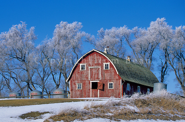 Frosty trees and red barn, winter in the country, north of Hubbard, Iowa, AGPix_0243.