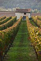 Europe/Europe/France/Midi-Pyrénées/46/Lot/Env de Parnac: Le Vignoble AOC Cahors