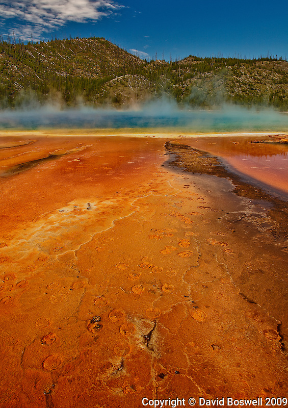 Bacterial mats and bison hoof prints next to Grand Prismatic Spring in Midway Geyser Basin, Yellowstone National Park.