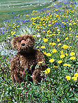 A teddy bear sits among wild flowers in Montana.