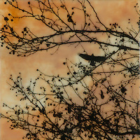 Encaustic painting and photography of silhouette of bird in branch with berries.