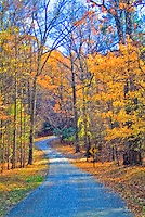 Fall Foliage Winding Road