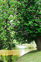 The banks of the River Cherwell as it flows through Oxford, are shaded with great horse chestnut trees.