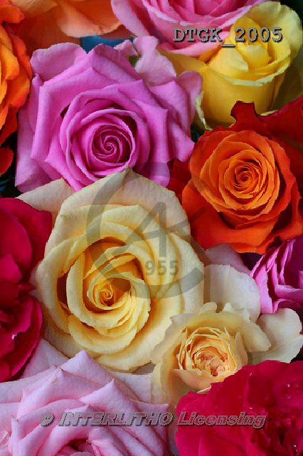 Gisela, FLOWERS, BLUMEN, FLORES, photos+++++,DTGK2005,#f#
