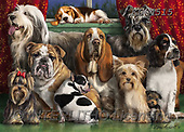 REALISTIC ANIMALS, REALISTISCHE TIERE, ANIMALES REALISTICOS, paintings+++++,KL4515,#a#, EVERYDAY ,puzzles ,dogs