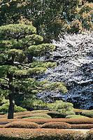Clipped azalea bushes and flowering cherries in Ninomaru (the Second Citadel) at Higashi-Gyoen