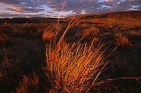Blazing sunset lights grasslands near Kiger Gorge atop Oregon's Steens Mountain. Ice Age glaciers carved our huge gorges of basalt out of the Great Basin's largest fault block mountain. Beyond, Steens's east face plummets a vertcal mile to the Alvord Desert.  The remote high desert region of southeast Oregon is protected under the Steens Mountain Cooperative Management and Protection Act of 2000.