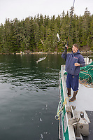 Prospecting for herring to check on size of fish during the Sitka sac roe herring fishery.
