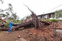 Lelia's tree fall