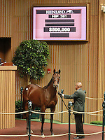 September 10, 2014: Hip #381 Giant's Causeway - Well Monied filly consigned by Eaton Sales sold for $500,000 at the Keeneland September Yearling Sale.   Candice Chavez/ESW/CSM