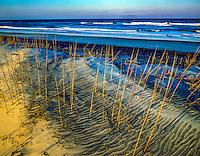 Beach grasses and sand patterns, Cape Hatteras Nationall Seashore, Noirth Carolina, Atlantic Ocean