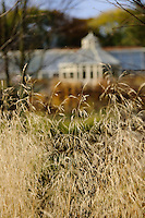 Deschampsia cespitosa 'Goldtau' with Conservatory