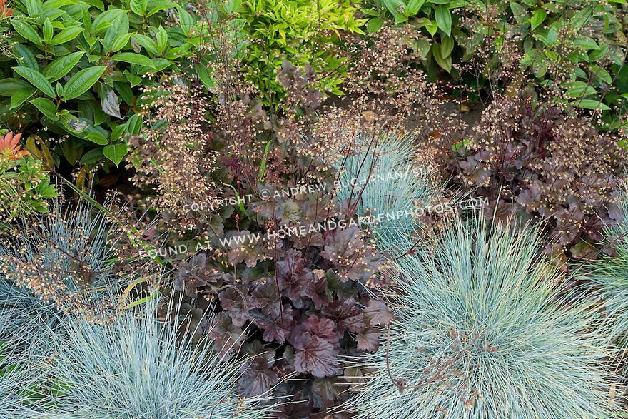 Df011458 garden ornamental grass heuchera for Red and green ornamental grass