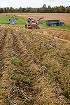 Potato harvest in Houlton, Maine, USA