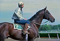 Horse racing; racehorse; Thoroughbred; racetrack, Paradise Creek, champion, Tom Albertrani, Bill Mott, Belmont Park